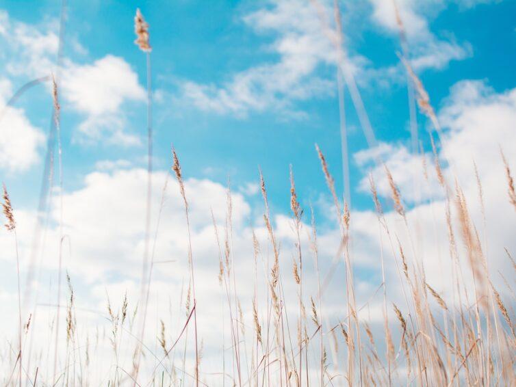 Europa Direkt Sydskåne önskar en trevlig sommar!